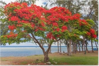 Plakat Ekstrawagancki Drzewo, Saint-Leu, Reunion
