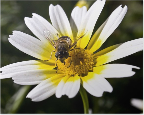 Plakát Fauna e flora - Květiny