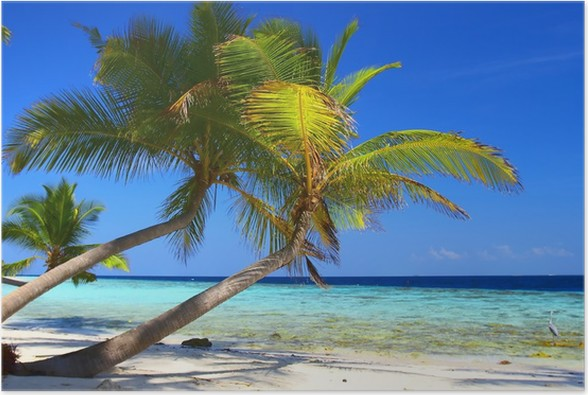 Plakát Fenomenální pláž s palmami a pták - Témata