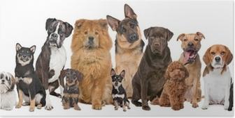 Plakat Grupa dwunastu psów