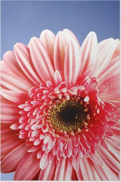Plakát Herbera - Květiny