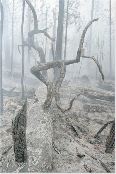 Plakát Hořel les - Přírodní katastrofy