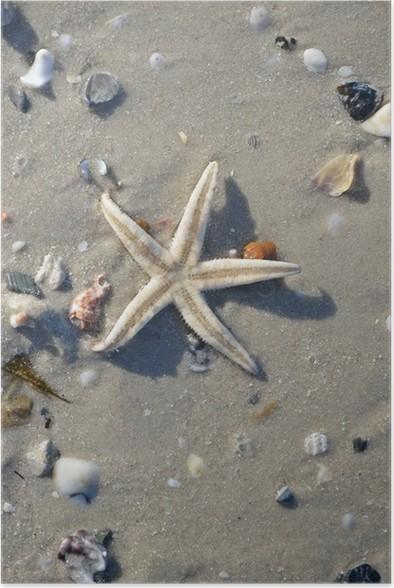 Plakát Hvězdice na pláži - Vodní a mořský život