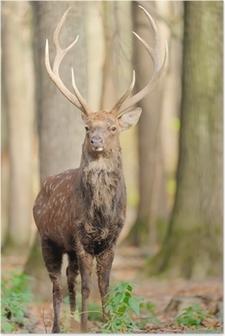 Plakat Jeleń w lesie jesienią