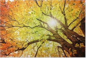 Plakat Jesienne drzewa