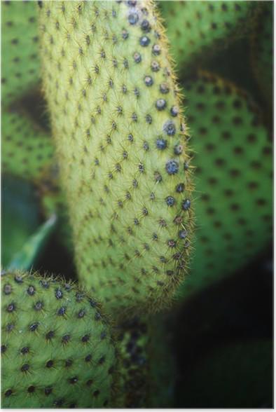 Plakát Kaktus - Květiny