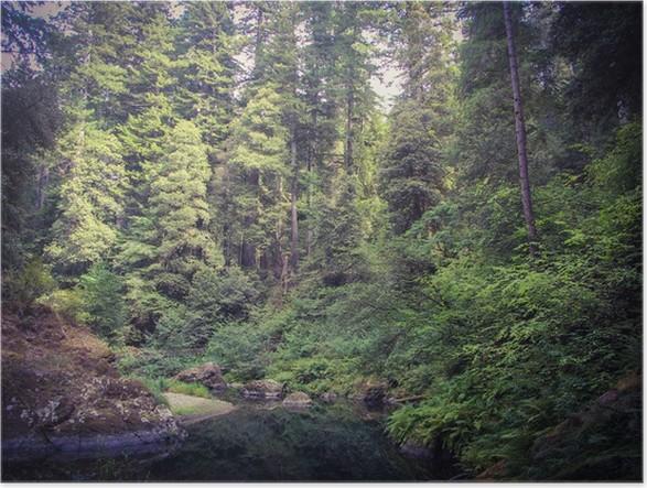 Plakát Kalifornie Redwoods - Příroda a divočina