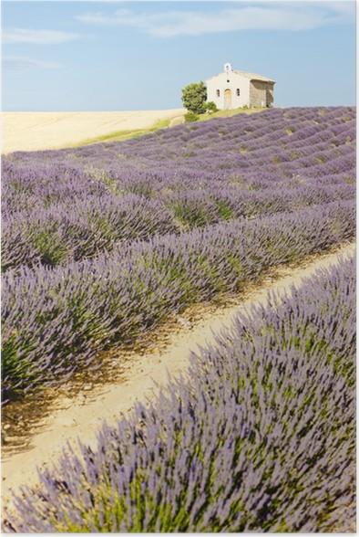 Plakát Kaple s levandulí pole, plateau de valensole, provence, Fran - Evropa
