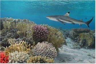 Plakat Kolorowy podwodny rafa koralowa z żółtym pozbawiony ryb i duże