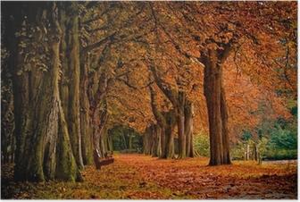 Plakat Kolory jesieni w lesie