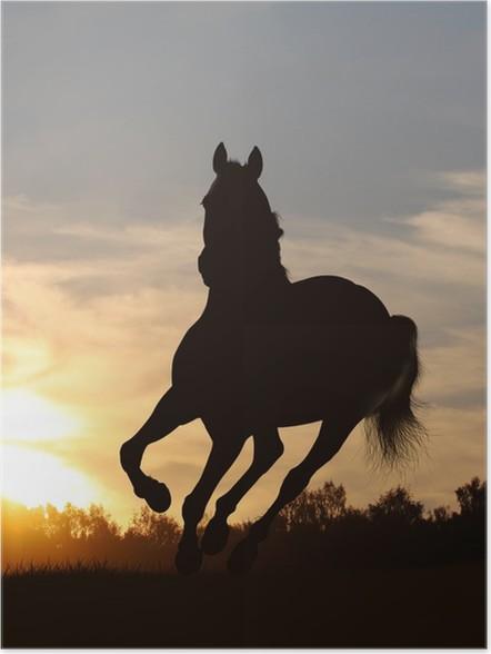 Plakát Koně při západu slunce - Savci