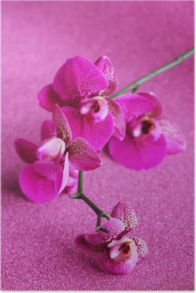 Plakát Krásné orchideje na fialovém pozadí - Květiny