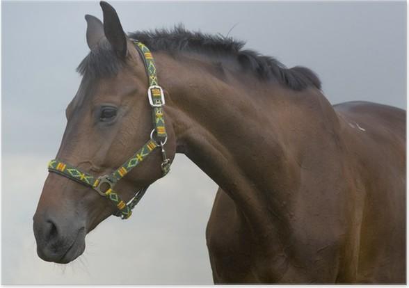 Plakát Kůň 3 - Savci