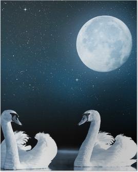 Plakat Łabędzie na jeziorze w nocnym niebie.