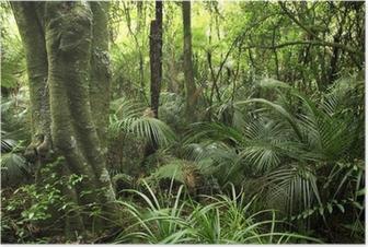 Plakat Las tropikalny