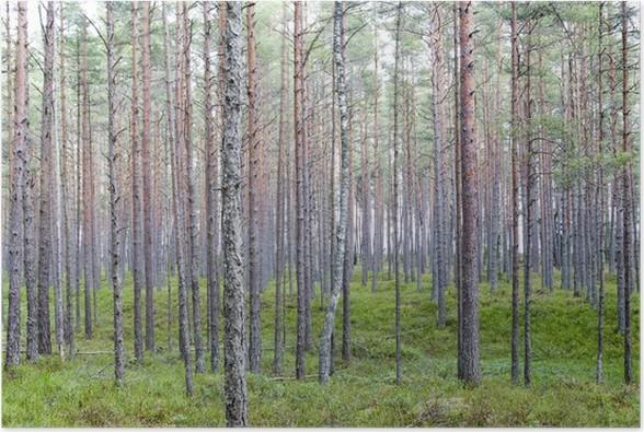 Plakát Les - Lesy