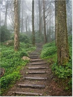 Plakat Leśna ścieżka
