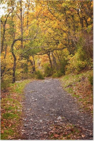 Plakát Lesní cesta na podzim. Hayedo de Tejera Negra, Španělsko - Zemědělství