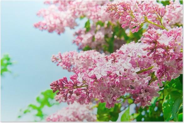 Plakát Lila květy - Rostliny