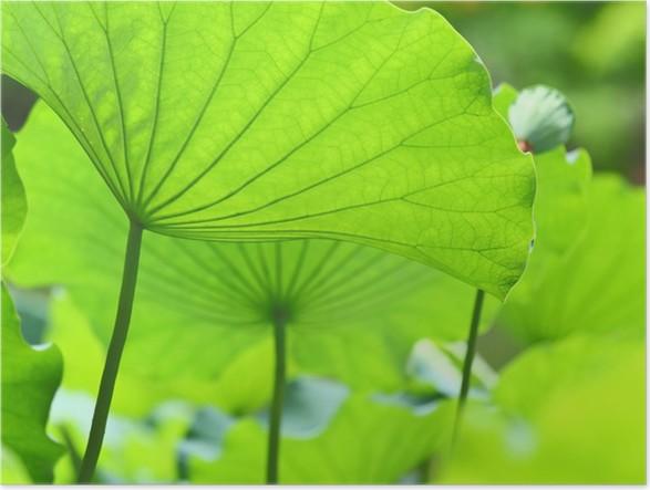 Plakát Lotus listy - Květiny