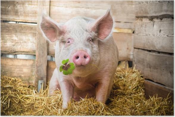 Plakát Lucky Pig - Témata