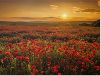 Plakát Maková pole při západu slunce