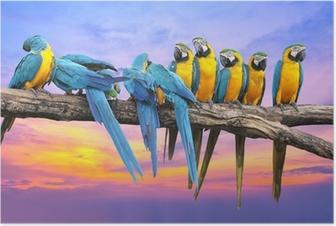 Plakat Niebieski i żółty ara z piękne niebo o zachodzie słońca