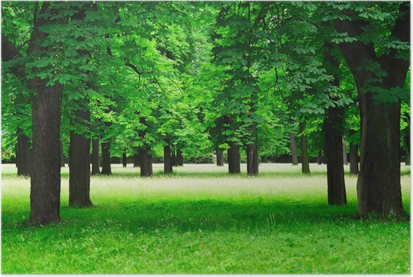 Plakát Odstranění - Stromy