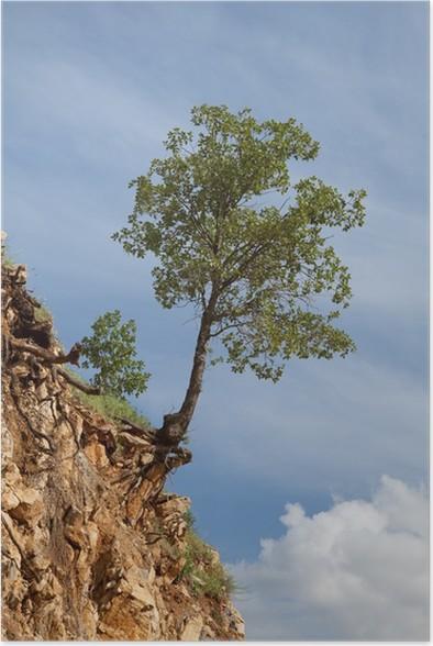 Plakát Osamělý strom pěstuje na skály proti modré obloze - Stromy