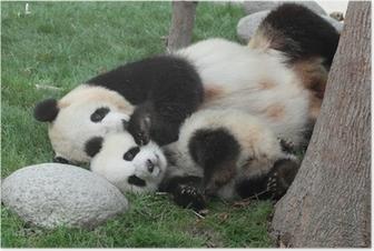 Plakat Panda z jej cub spanie na trawie