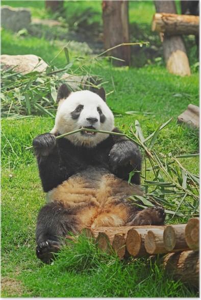 Plakát Panda - Témata