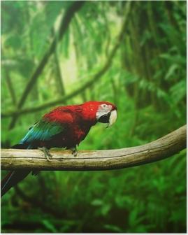 Plakat Parrot w dżungli