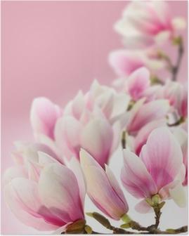 Plakat Photo magnolii
