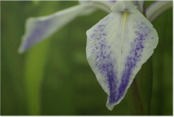 Plakát Piha Iris - Domov a zahrada
