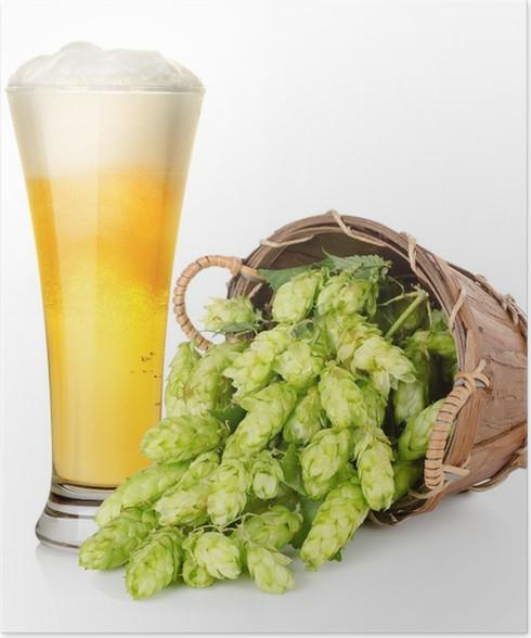 Plakát Pivo a hop do košíku - Alkohol
