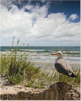 Plakat Plaża z mewy :)