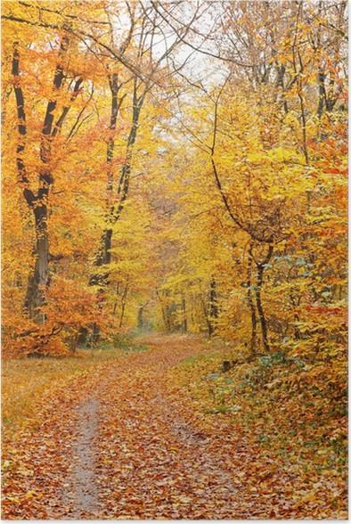Plakát Podzimní les - Roční období