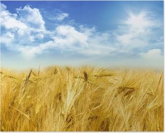 Plakat Pole kukurydzy