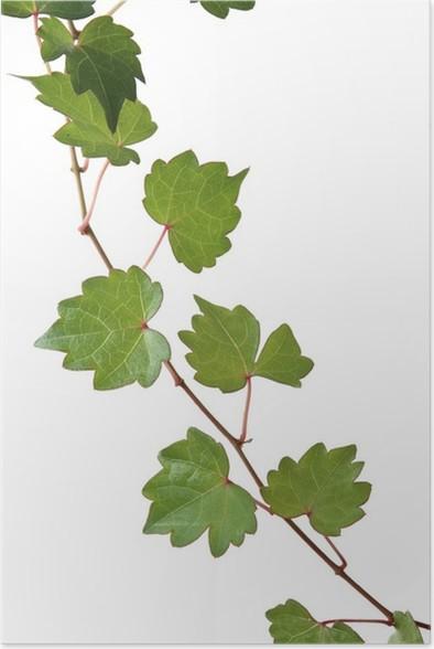 Plakát Ponechává - Rostliny