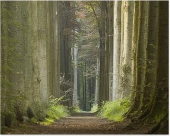 Plakát Příroda cesta