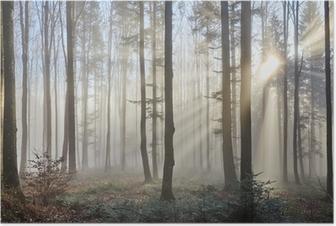 Plakat Promienie słoneczne w mglistym lesie