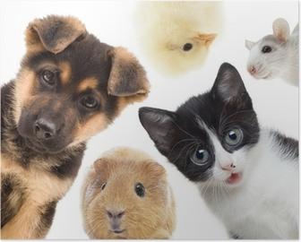Plakat Puppy kitten i świnka