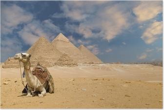Plakát Pyramidy velbloud