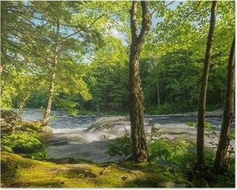 Plakát Řeka v lese
