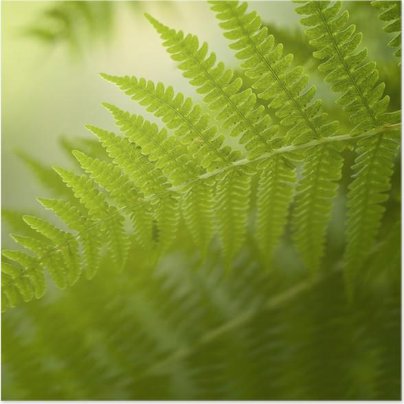 Plakát Rozmazané kapradina pozadí - Rostliny