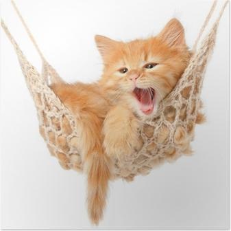 Plakát Roztomilá zrzavá kočička v houpací síti