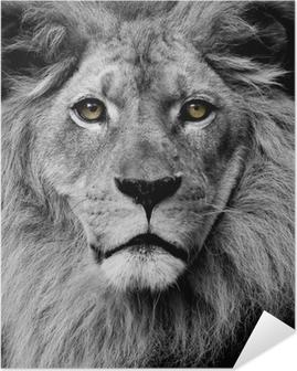 Plakat samoprzylepny Lew oczy