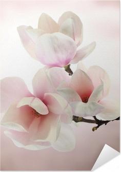 Plakat samoprzylepny Magnolia