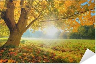 Plakat Samoprzylepny Piękne drzewa jesienią z opadłych liści suchych