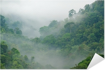 Plakat samoprzylepny Poranna mgła w lesie tropikalnym